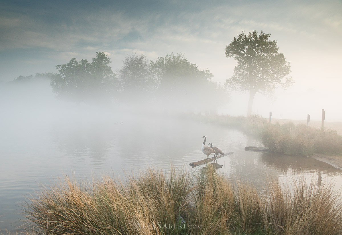 A print of a Together in the Mist in Richmond Park