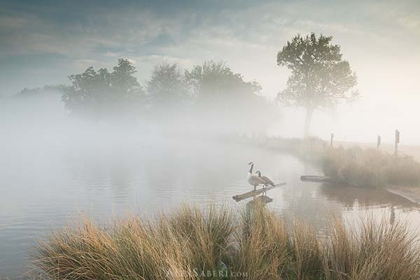 Geese in the mist print