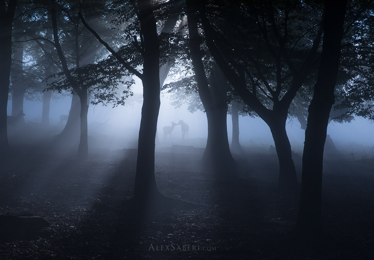 The enchanted forest scenes of Richmond Park print photo