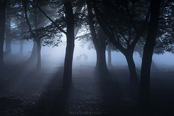 Print of deer in the mists of Richmond Park.