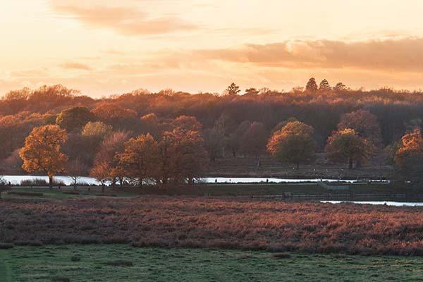 Print of Richmond Park during an Autumn Sunset.