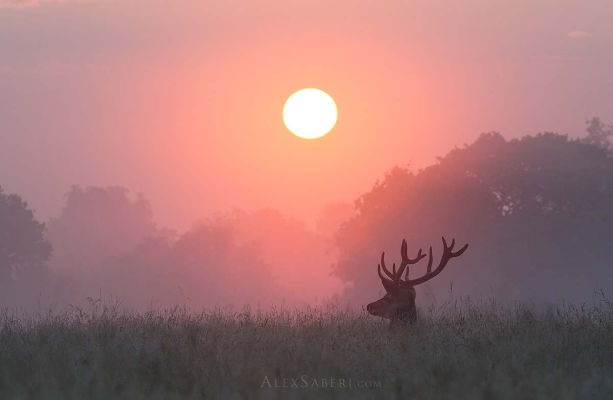 A print poster of a Richmond Park stag.