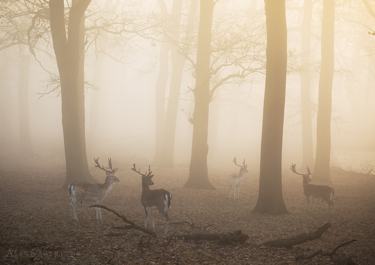 The Call in Richmond park