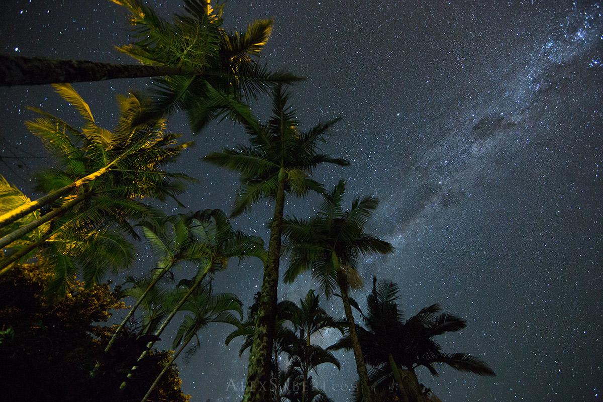Ubatuba at night with palm trees